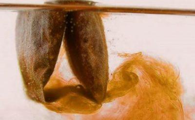 Что будет с телом, если пить много чая каждый день?