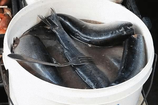 Наша семья уже давно не покупает соленую скумбрию или селедку в магазине, домашняя засолка намного вкуснее, да и безопаснее. Потрясающая рыбка получается!
