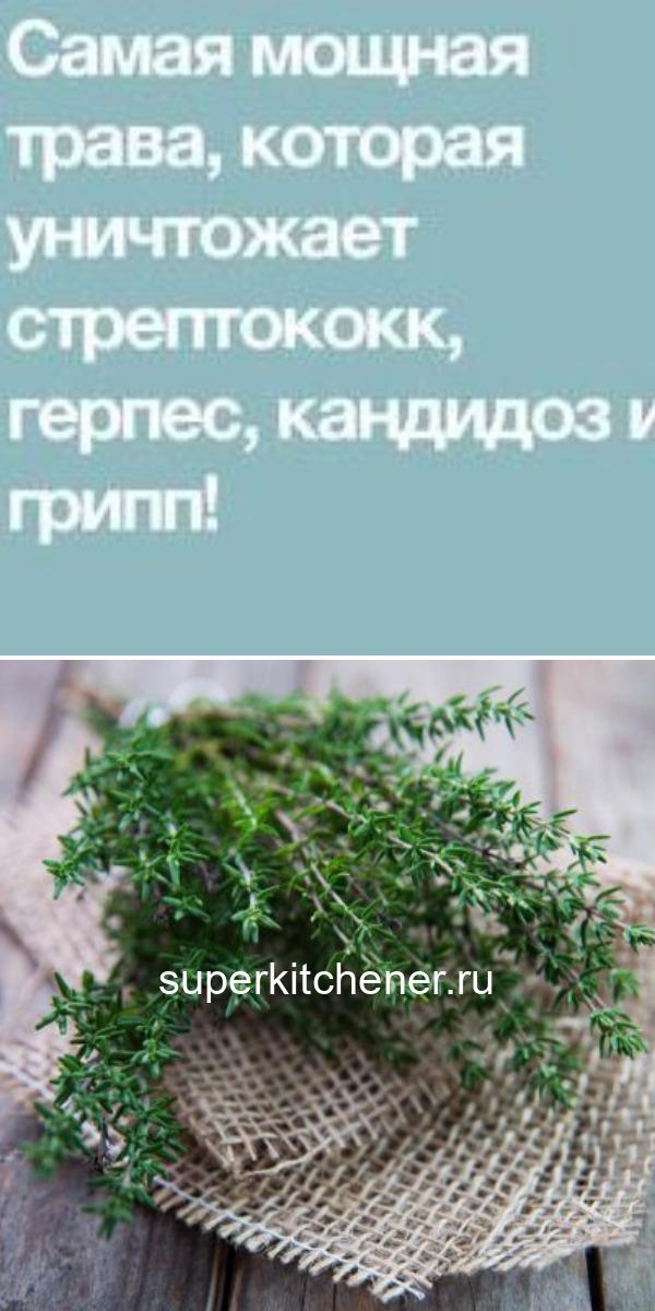 Самая мощная трава, которая уничтожает стрептококк, герпес, кандидоз и грипп!